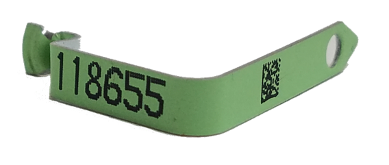 fusion green wing band