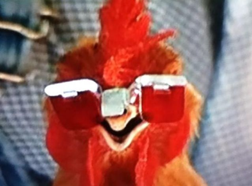 chicken with glasses