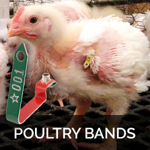 poultry wing bands poultry leg bands