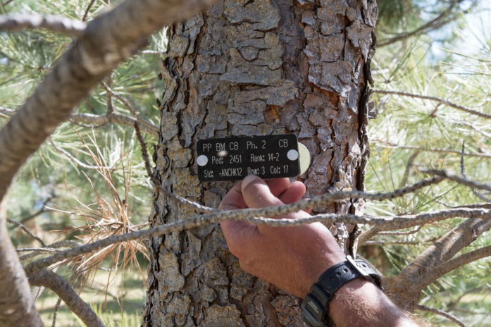 forestry tree tags